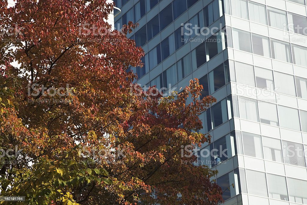 Autumn in the city. royalty-free stock photo