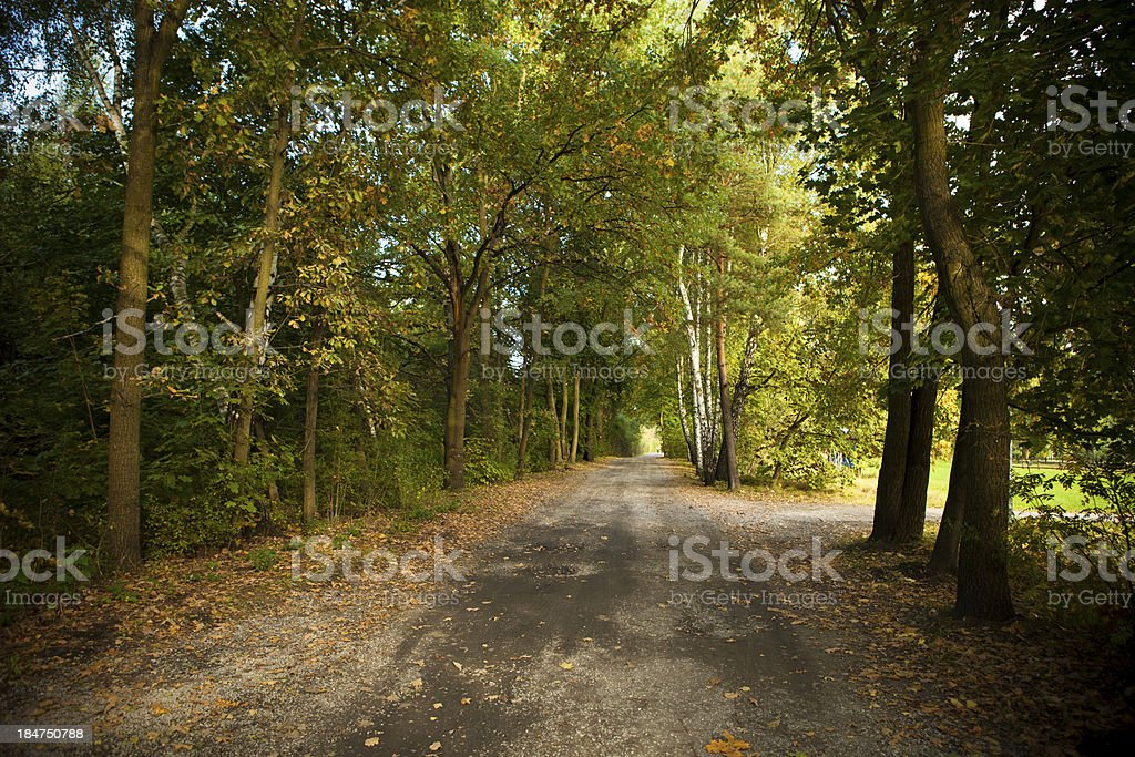 Autumn in the forest, end of summer royalty-free stock photo