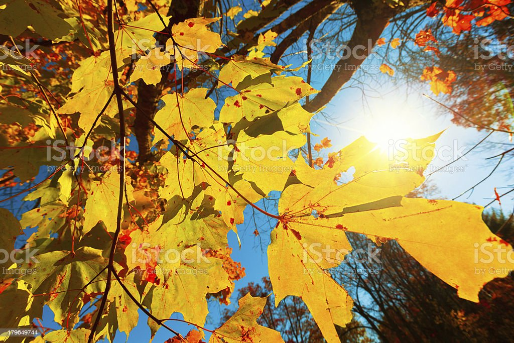 Autumn in the Forest royalty-free stock photo