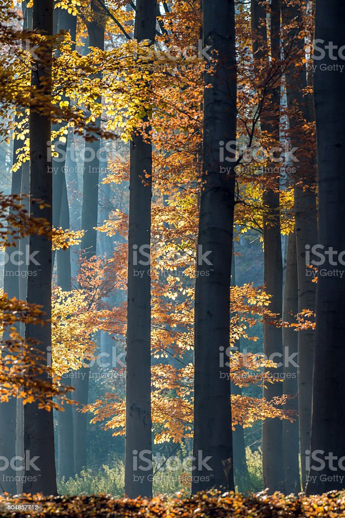 Autumn in the forest. stock photo
