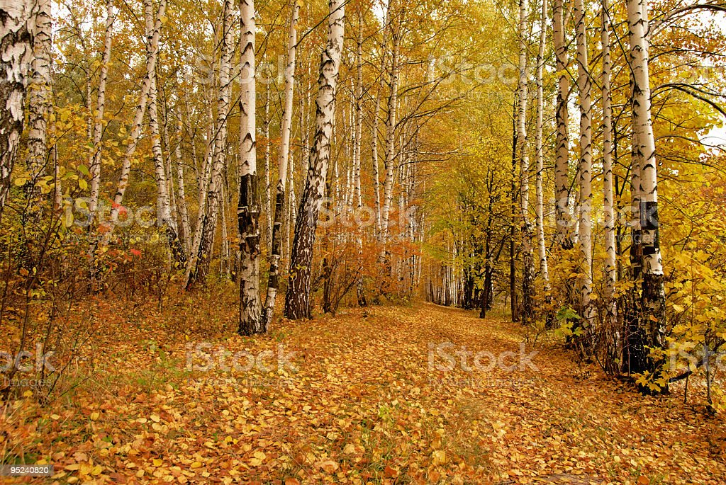 Autumn in the Forest stock photo