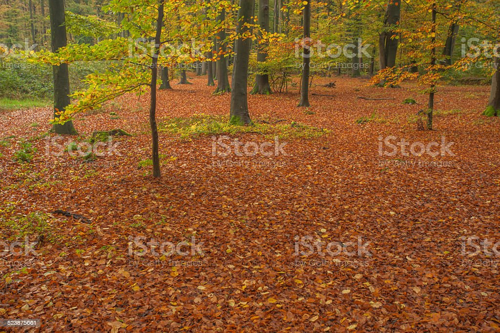 Autumn in the forest with carpet of red autumn leaves stock photo