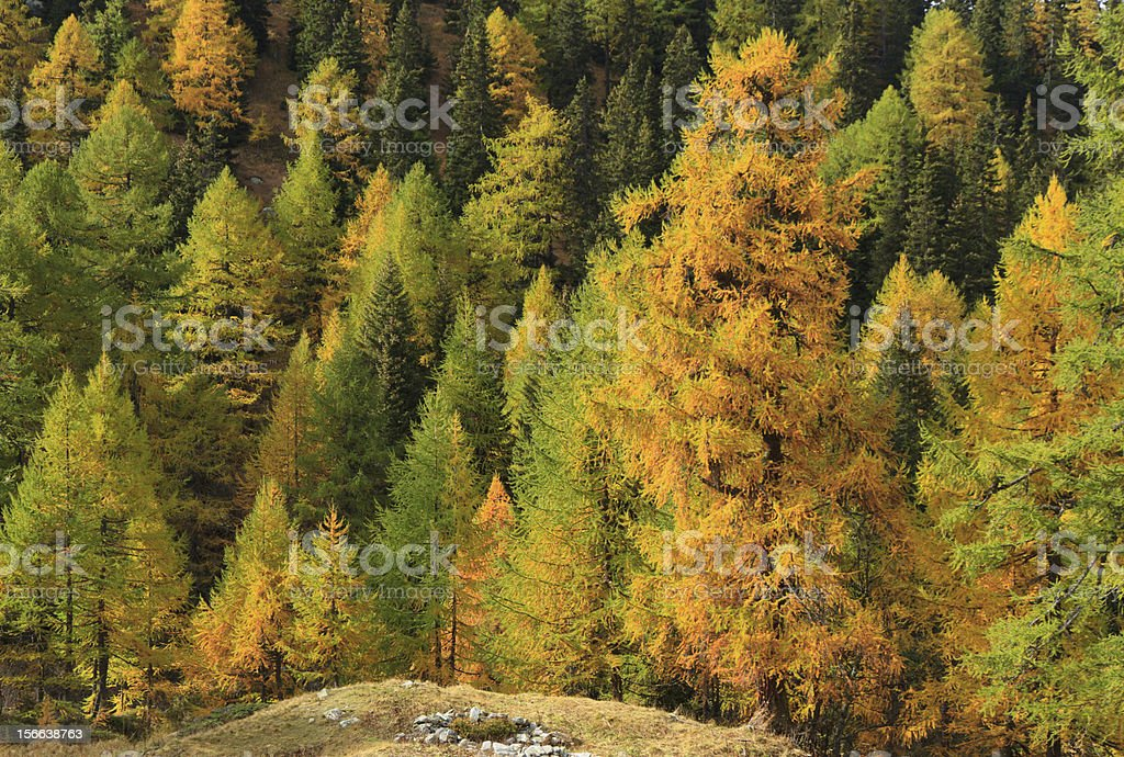 Autumn in the forrest royalty-free stock photo