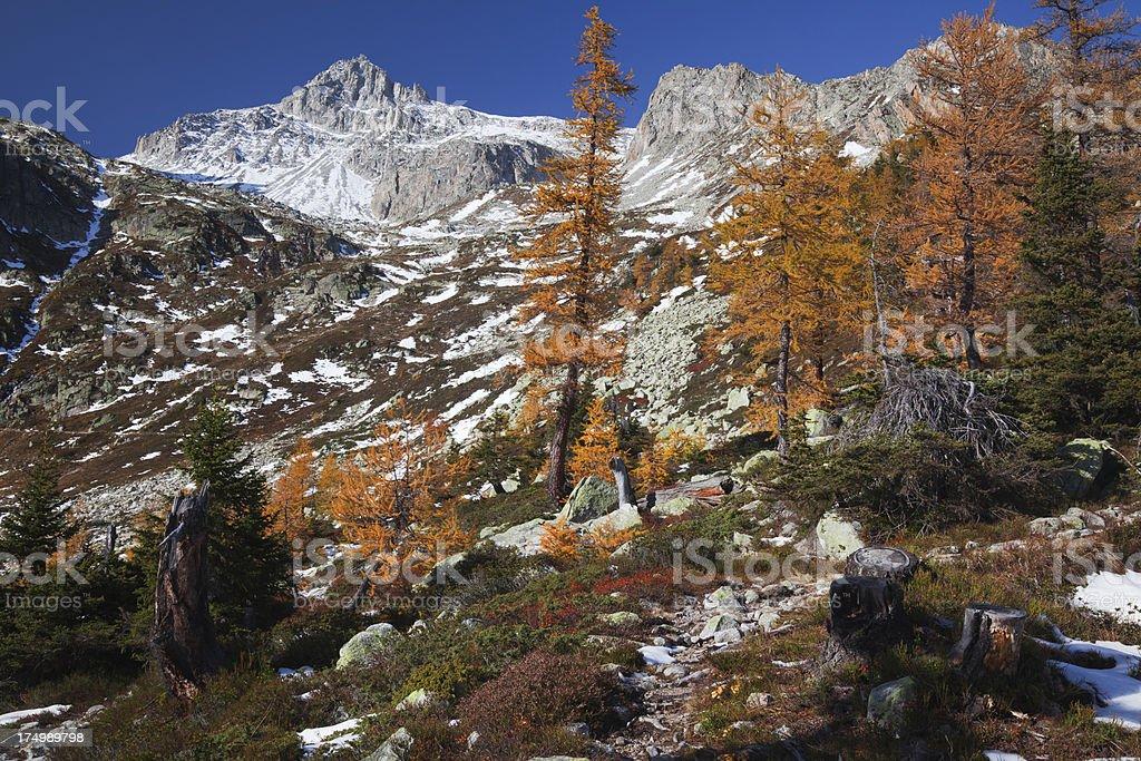 Autumn in the mountain royalty-free stock photo