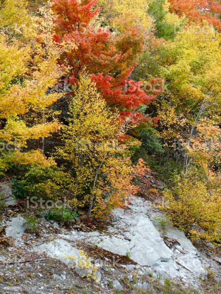Autumn in the mountains stock photo