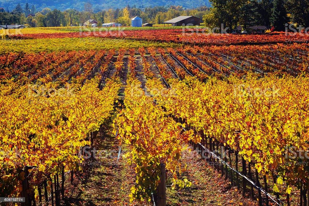 Autumn in the Napa Valley, CA stock photo