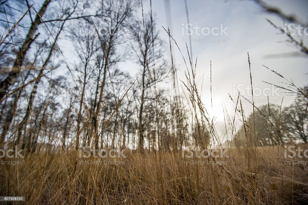 Herbst im Nationalpark De Hoge Veluwe stock photo