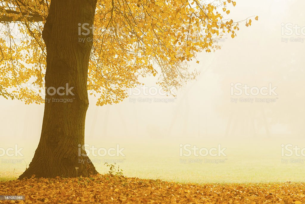 Autumn in the Park - 36 Mpx royalty-free stock photo
