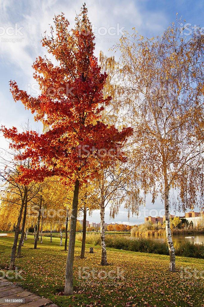 Autumn in the park lagoon royalty-free stock photo