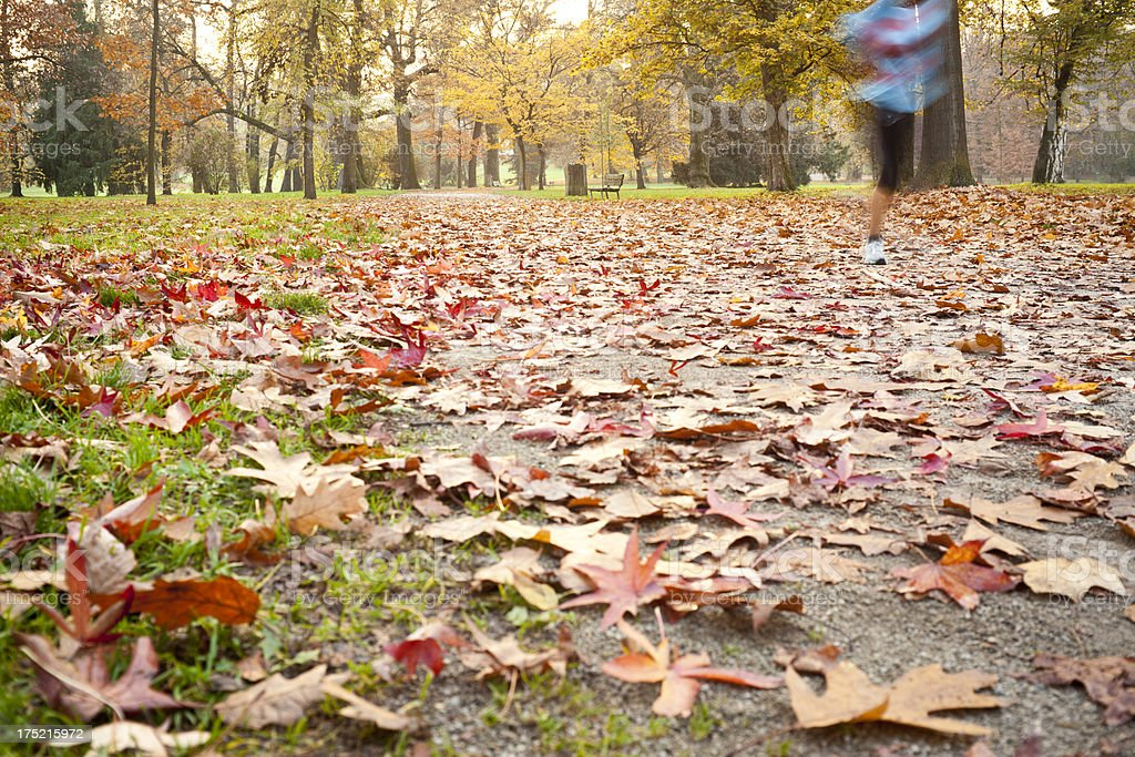 Autumn In The Park royalty-free stock photo