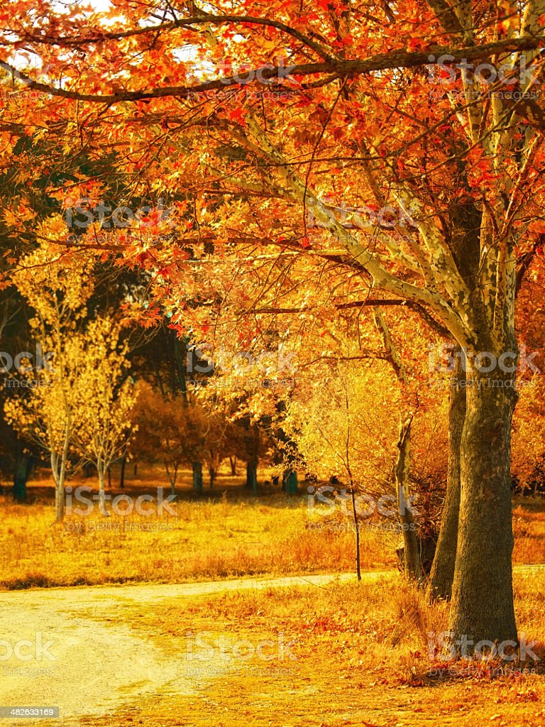 Autumn in the Park stock photo