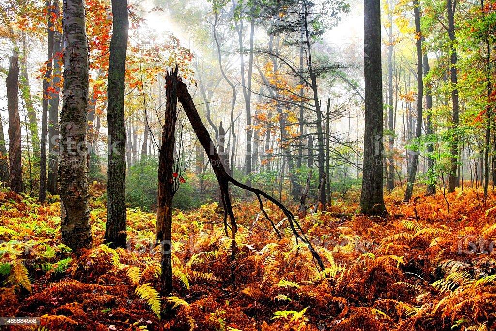 Autumn in the Quabbin Reservoir Watershed region of Massachusetts stock photo
