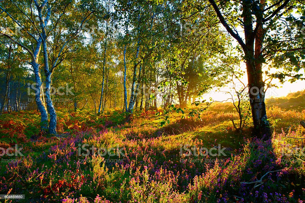 Autumn In The Surrey Hills stock photo
