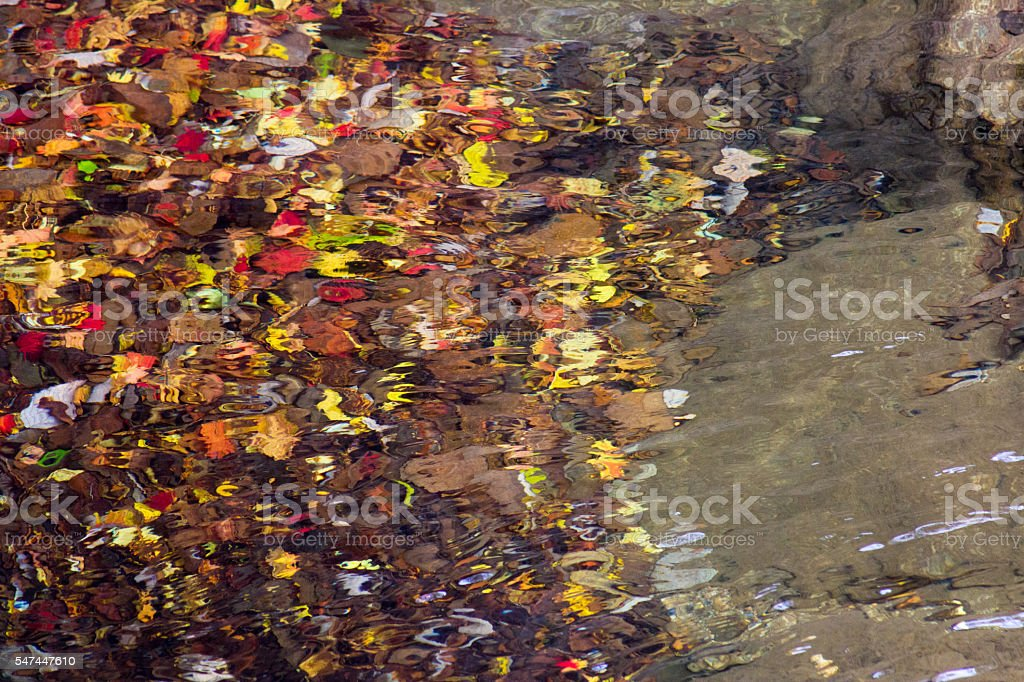 autumn in the water royalty-free stock photo