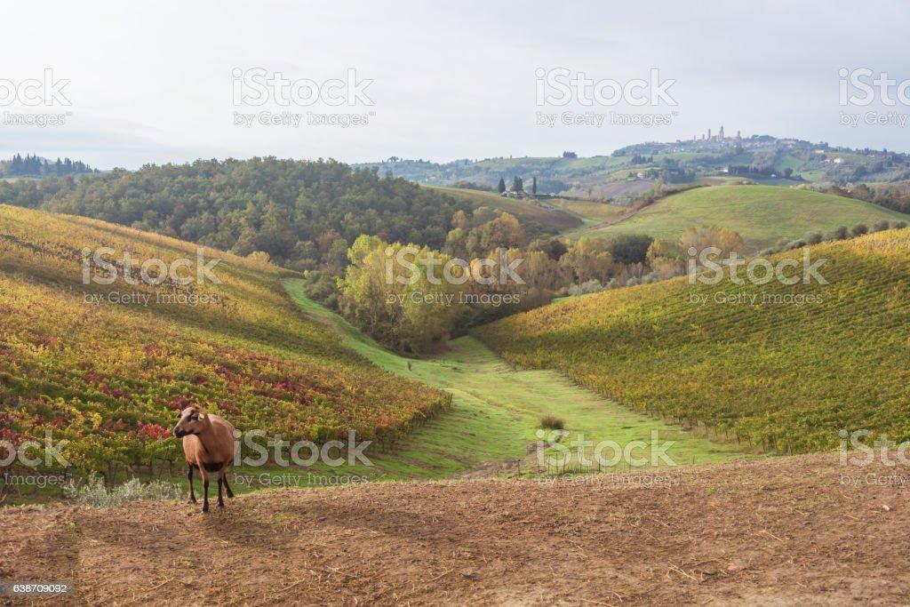 Autumn in Tuscany, Italy stock photo