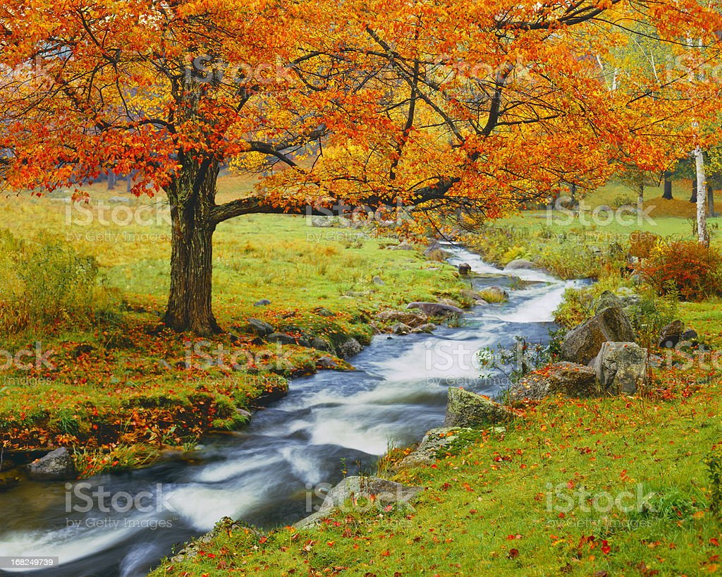 Autumn In Vermont (g) stock photo