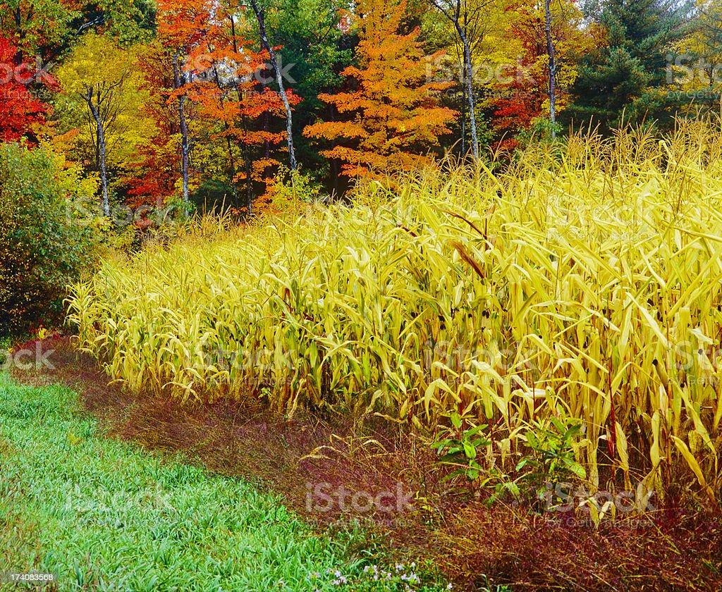 Autumn in Vermont  (P) stock photo