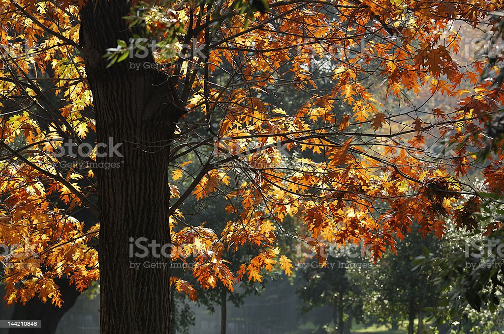 Autumn in Villa Borghese royalty-free stock photo