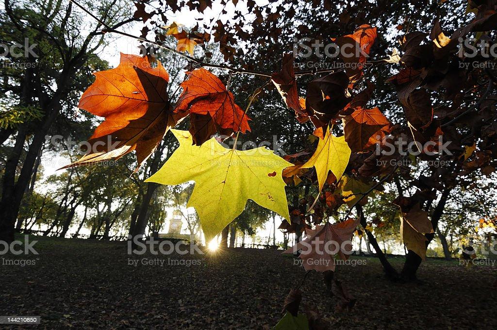 Autumn in Villa Borghese royalty-free stock photo