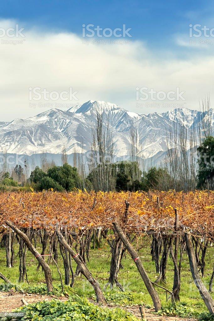 Autumn in vineyard stock photo