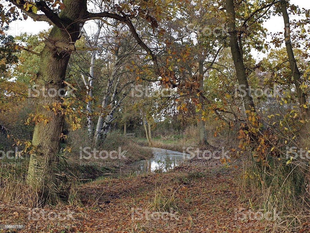 Autumn in Woodwalton fen nature reserve. stock photo