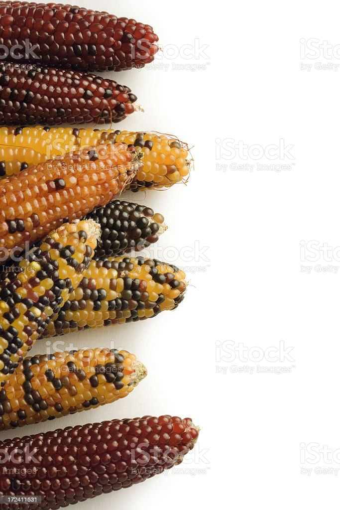 Autumn Indian Corn Side Border royalty-free stock photo