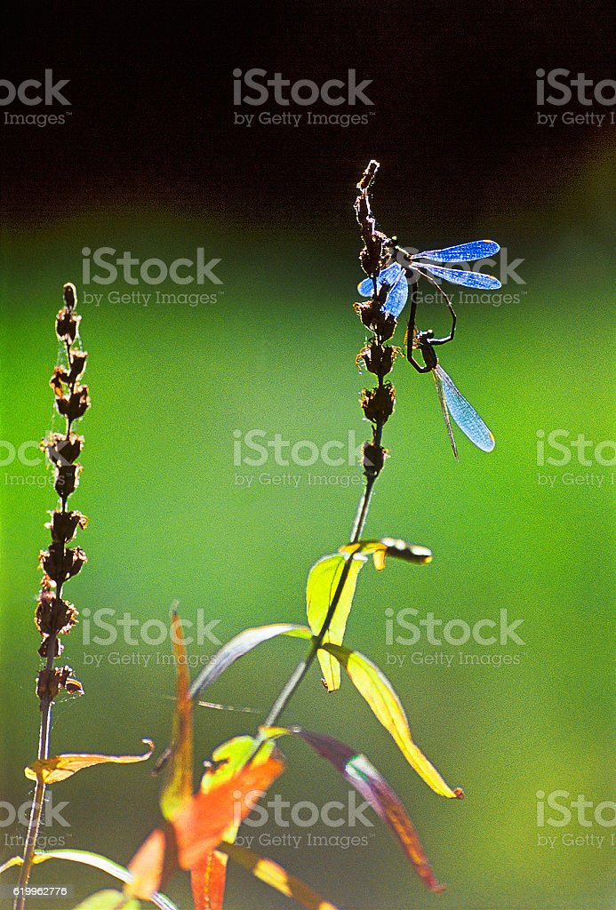Autumn, Indian Summer, dragonfly. stock photo