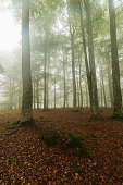 Autumn is coming, misty forest