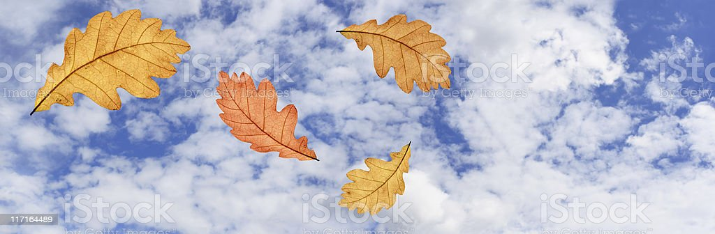 Autumn Is Comming royalty-free stock photo