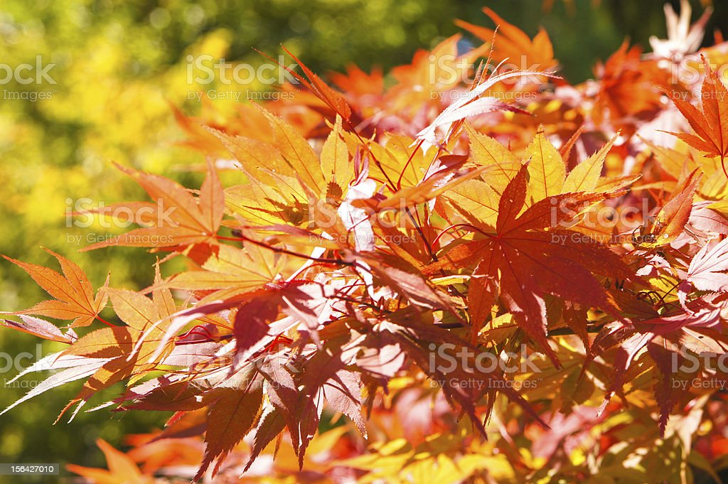 Autumn is here!!! royalty-free stock photo