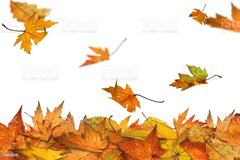 Autumn is here stock photo