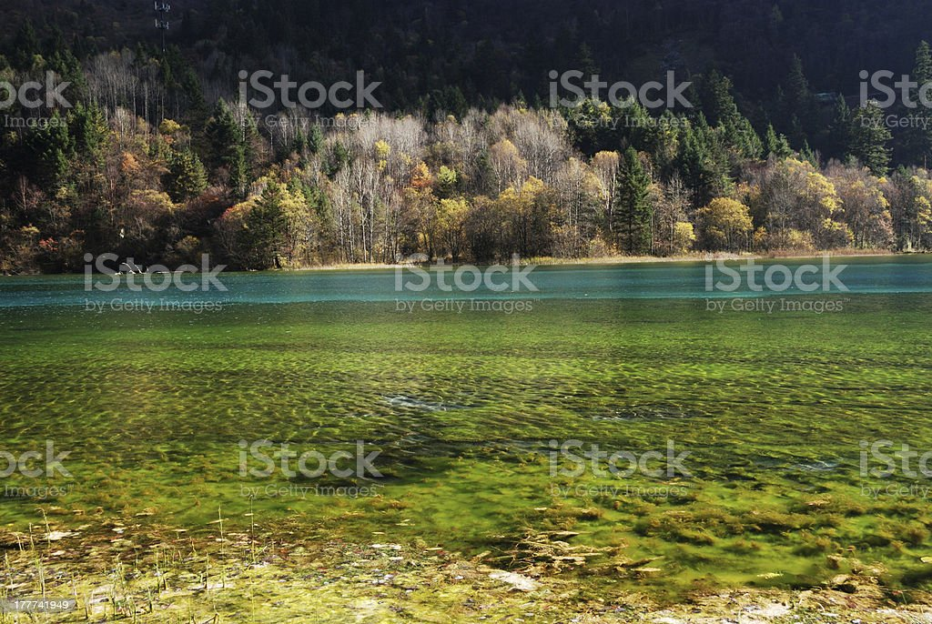 Autumn, Jiuzhaigou, China Wu Huahai royalty-free stock photo