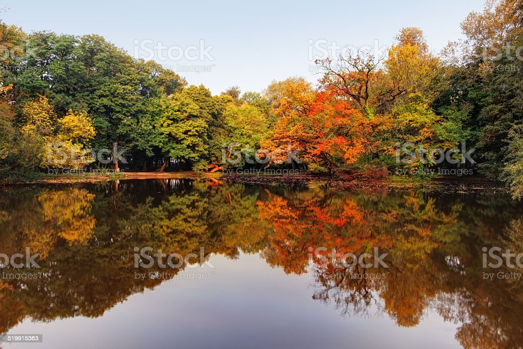 Autumn lake and forest stock photo