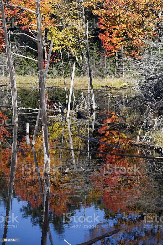 Autumn Lake royalty-free stock photo
