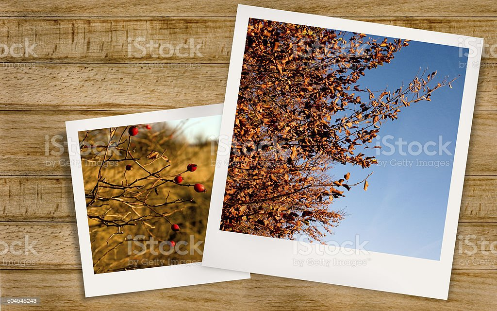 Autumn Landscape and rosehips stock photo