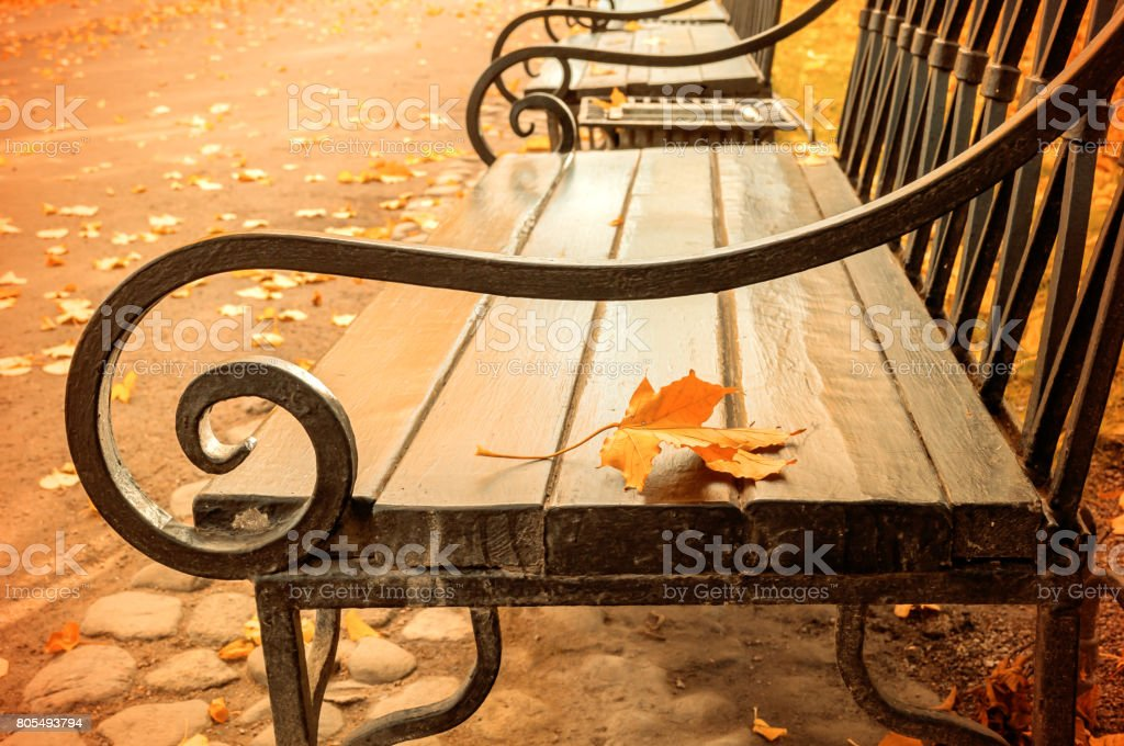 Autumn landscape -  autumn leaf on the wooden lonely bench stock photo