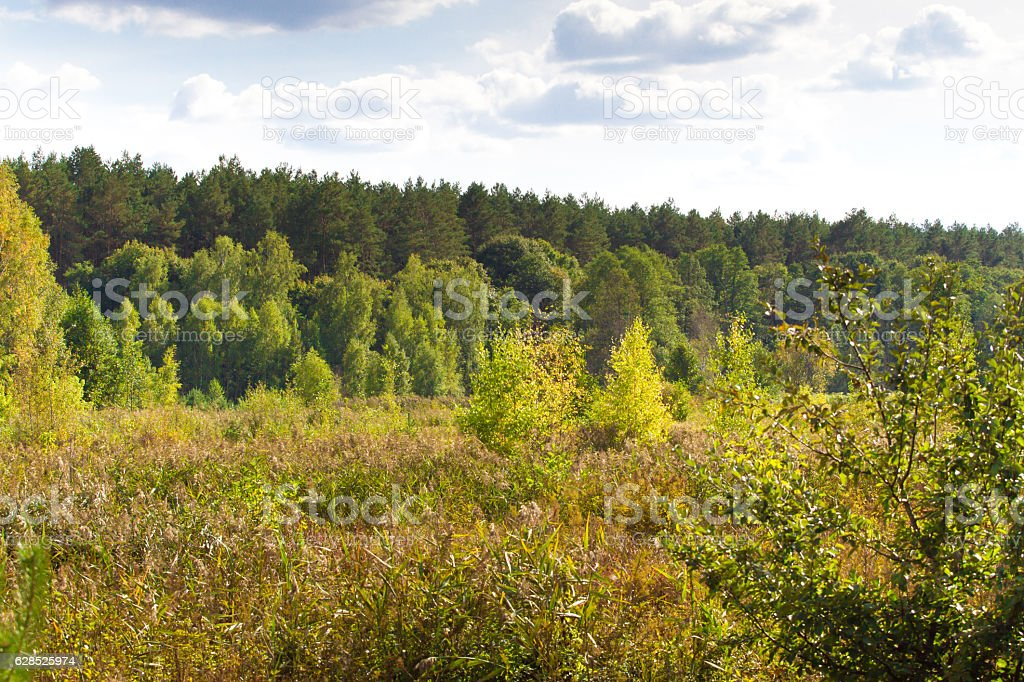 Autumn landscape deciduous trees. Climax, stable ecosystem, purity of nature stock photo