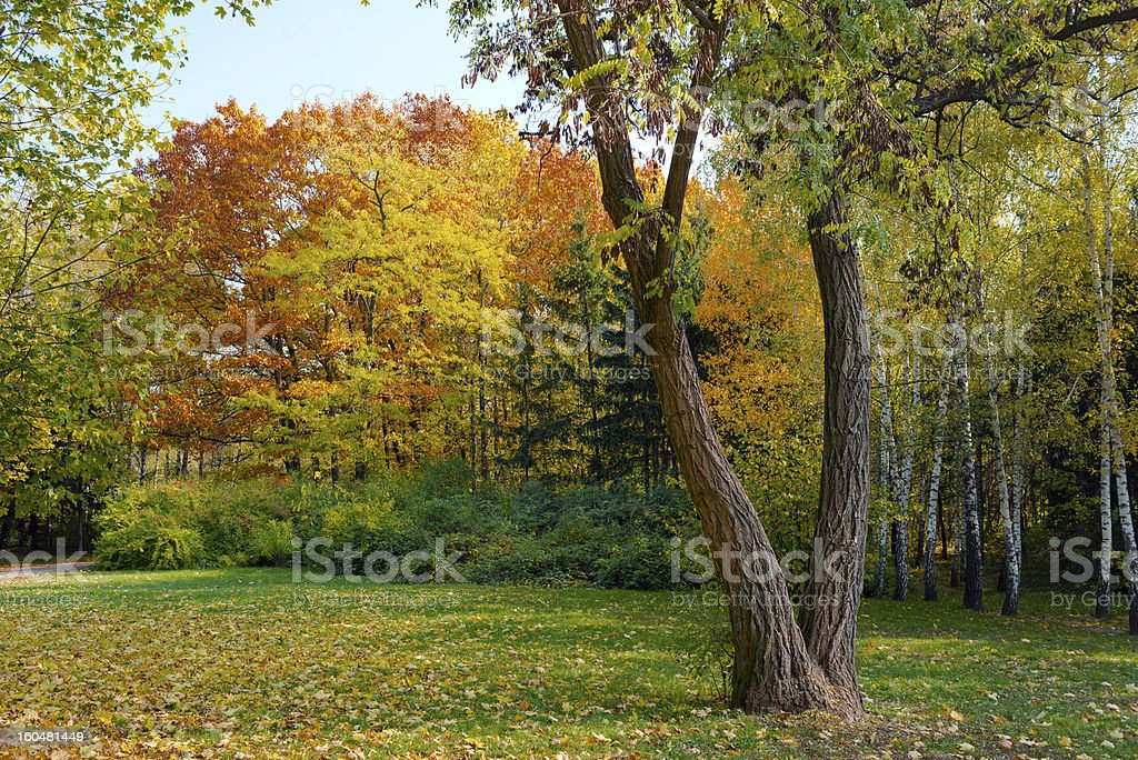 Autumn Landscape, forest royalty-free stock photo