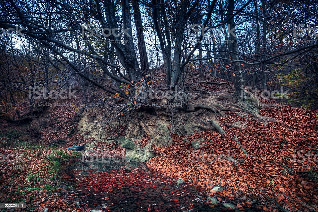 autumn landscape forest with water and leafs stock photo