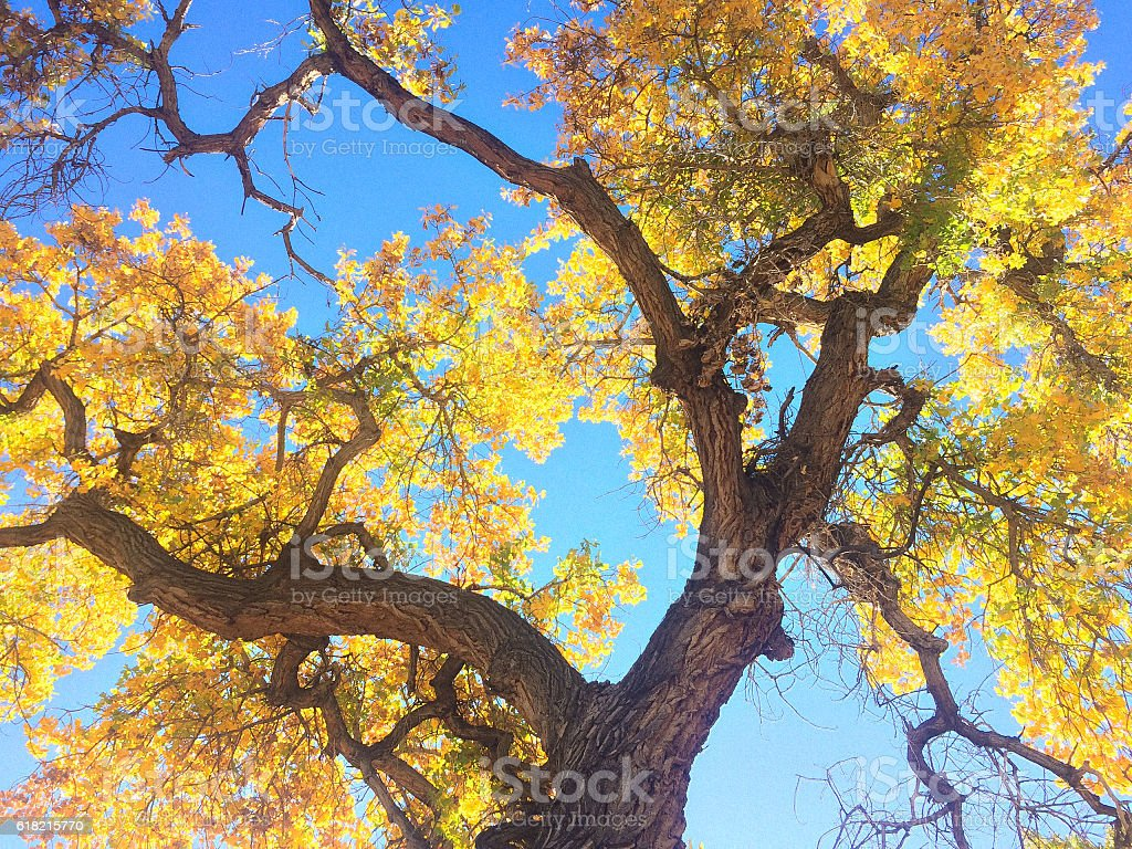 autumn landscape forest yellow trees stock photo