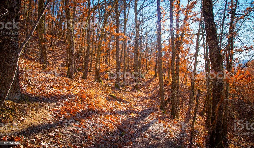 Autumn landscape - oak wood royalty-free stock photo