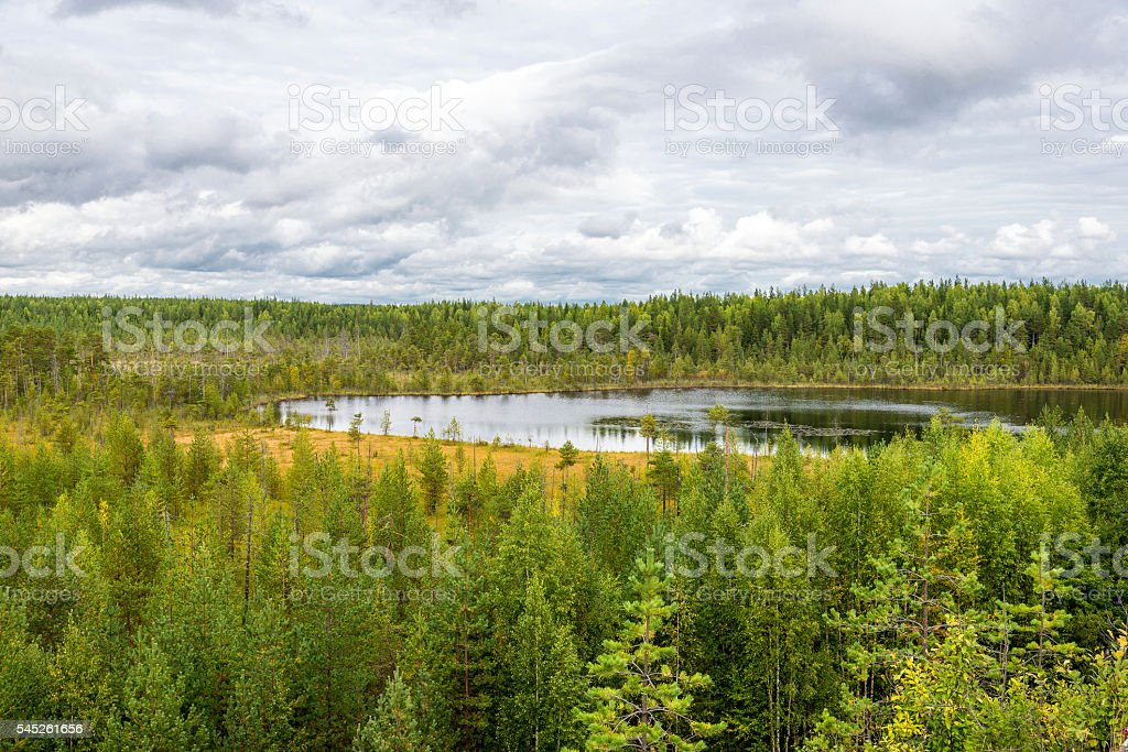 autumn landscape of pine forest in Russky Sever National Park stock photo