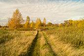 Autumn landscape on background sky