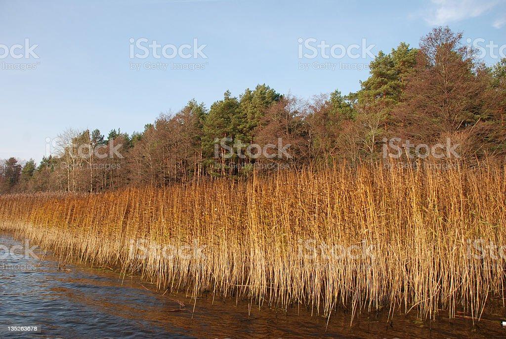 Autumn landscape royalty-free stock photo