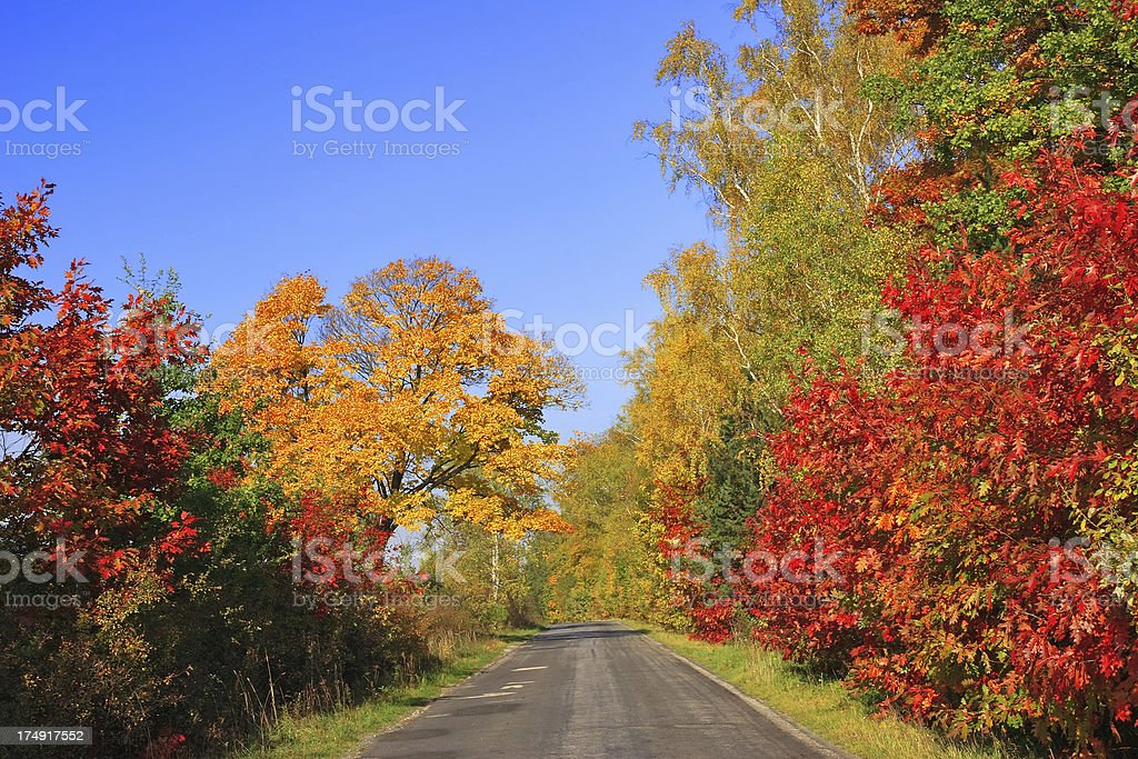 Autumn landscape - road royalty-free stock photo