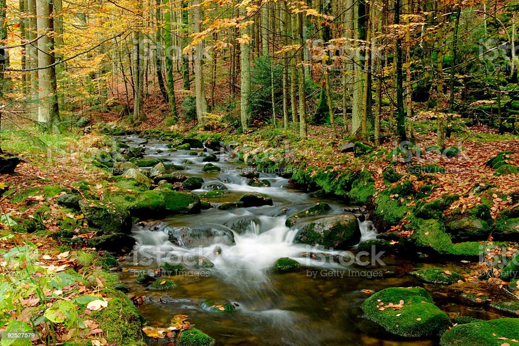 Autumn landscape with brook in forest stock photo