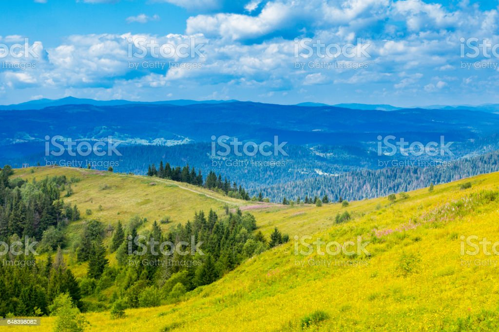 Autumn landscape with fog in the mountains. Fir forest on the hills. stock photo