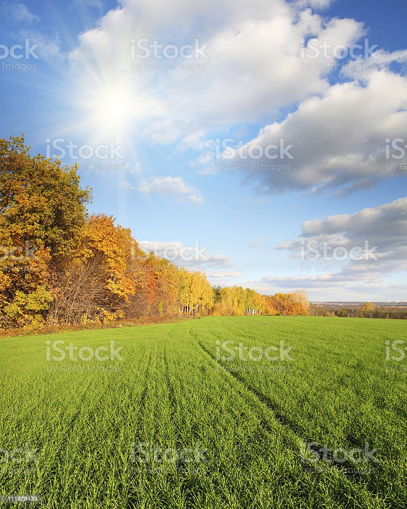 autumn landscape with green field stock photo