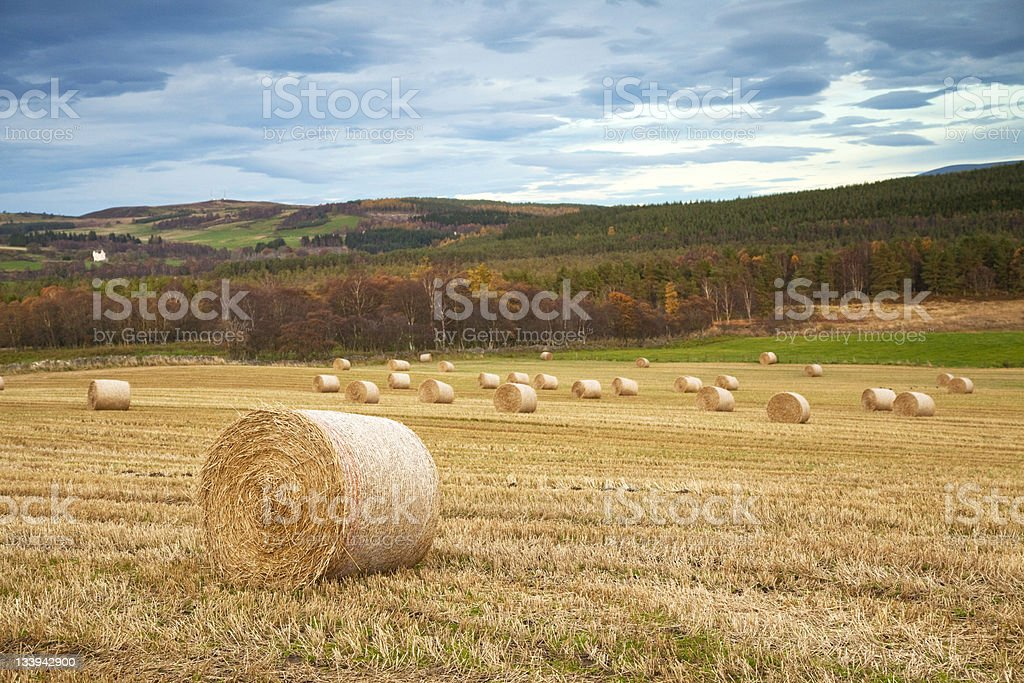 Autumn Landscape with Hay Bales royalty-free stock photo