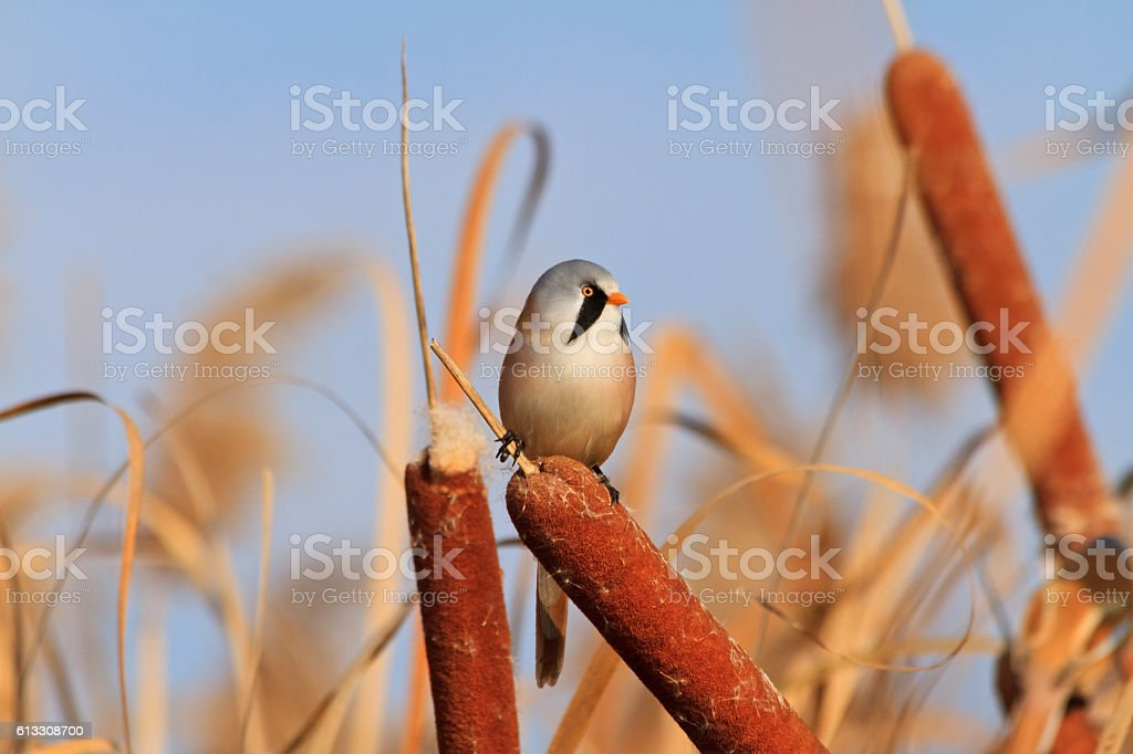 autumn landscape with interesting bird stock photo